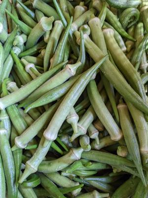 【農薬 化学肥料 不使用】 やわらか!沖縄島オクラ(丸さや)1kg(約80-90本入)