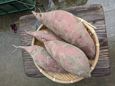 【農薬 化学肥料 不使用】 しっかり熟成!甘くてとろける!!安納芋 3kg