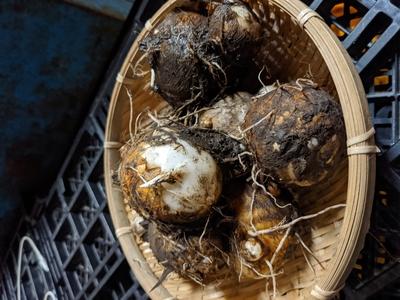 【農薬 化学肥料 不使用】やわらかい!里芋(石川早生)3kg(約30個)