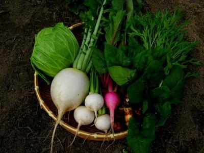 【農薬 化学肥料 不使用】四季のとれたて野菜セット(M) 8-10品目