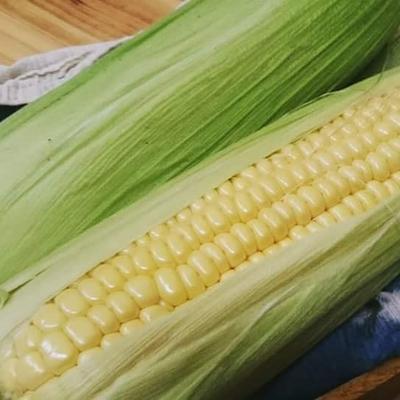 【農薬 化学肥料 不使用】朝どれスイートコーン10本
