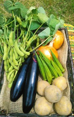 【農薬 化学肥料 不使用】 四季のとれたて野菜セット(S) 約6品目