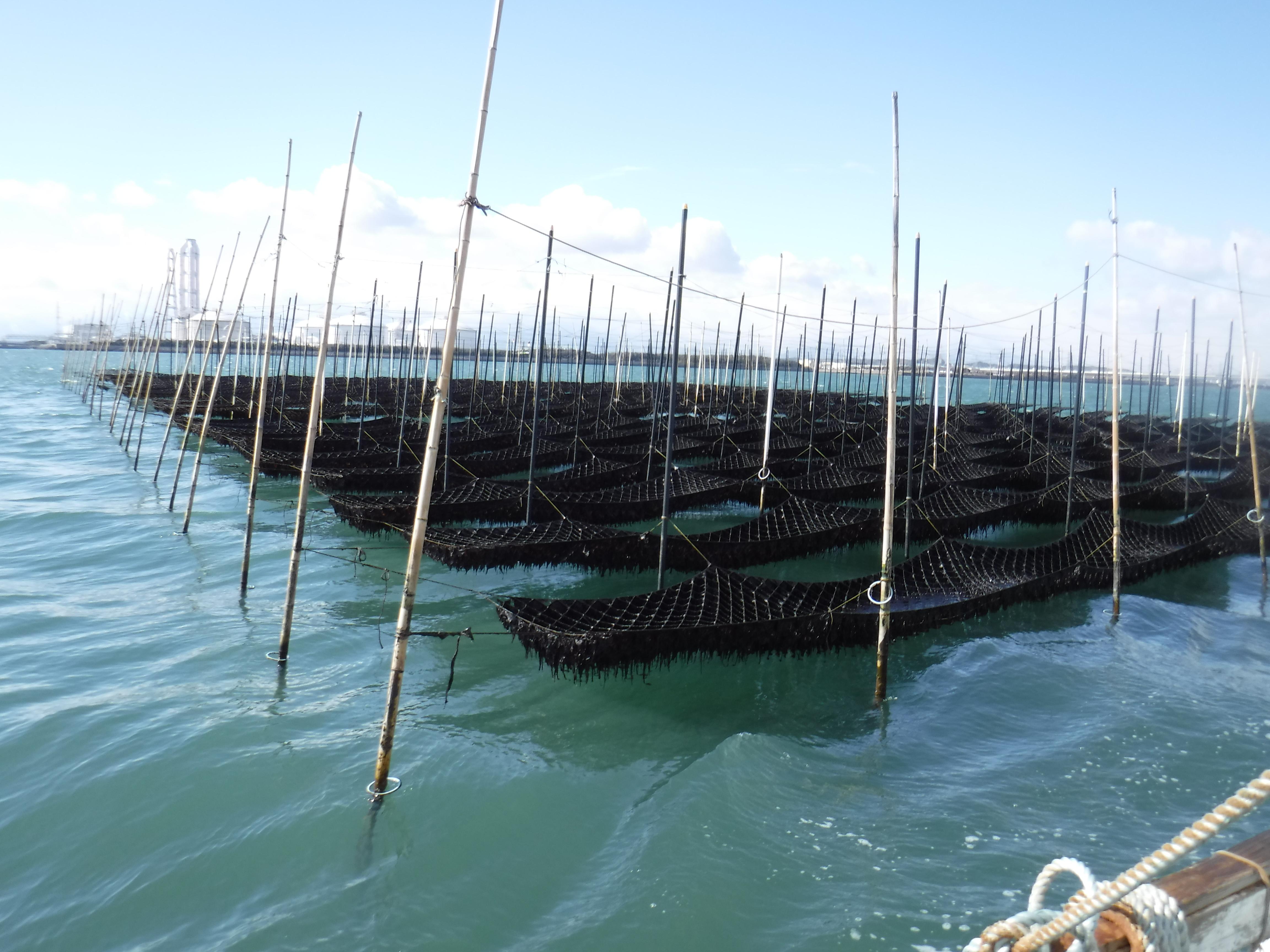 黒のり漁場