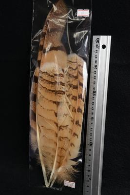 キャナル|EAGLE OWL OWL FOR BODY|イーグルオールforボディ