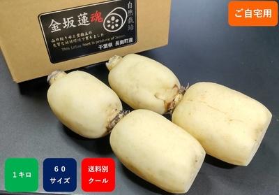 【ご自宅向け】新れんこん 自然栽培1kg 真空パック