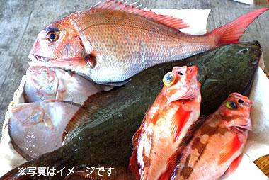 鮮魚パック 7,000円