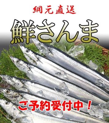 【冷蔵】 鮮さんま 6尾 K-11