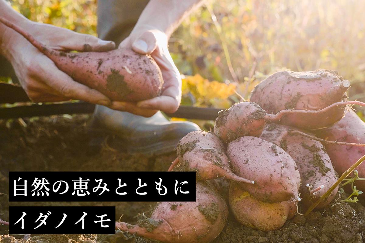 井田農園オンラインショップTOP
