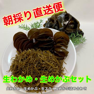 気仙沼産 生わかめ・生めかぶセット【Bセット】税込 送料込