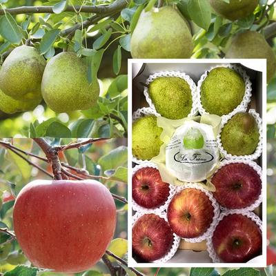 【セット商品】洋ナシとリンゴ食べ比べ3キロセット[10玉入り]
