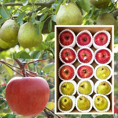 【セット商品】洋ナシとリンゴ食べ比べ5キロセット[15玉入り]