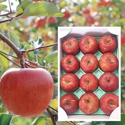 【りんご】フジ 3kg[12玉入り]