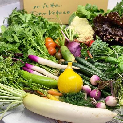 ファームベジコ 季節の野菜詰め合わせセット