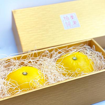 特撰ムキムキ文旦 (3Lサイズ) 2玉入り 【化粧箱入り】【冷蔵便】