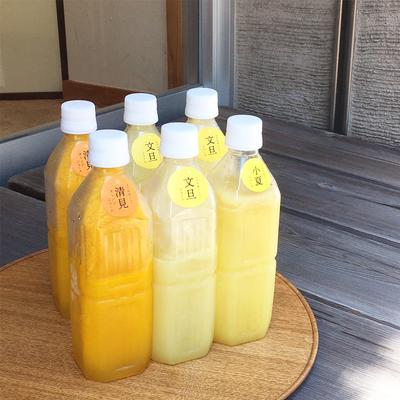 【限定100セット】美馬旅館セレクト 土佐の柑橘ジュース詰め合わせ【冷凍便】
