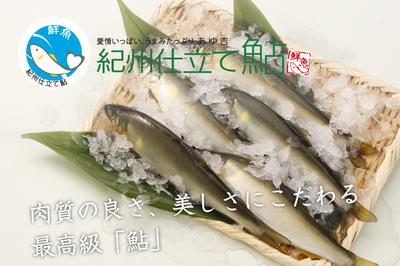 紀州仕立て鮎 鮮魚(冷蔵)(10尾入)
