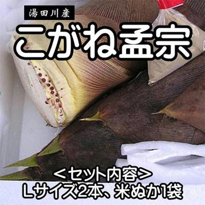 【期間限定】湯田川産 こがね孟宗2本