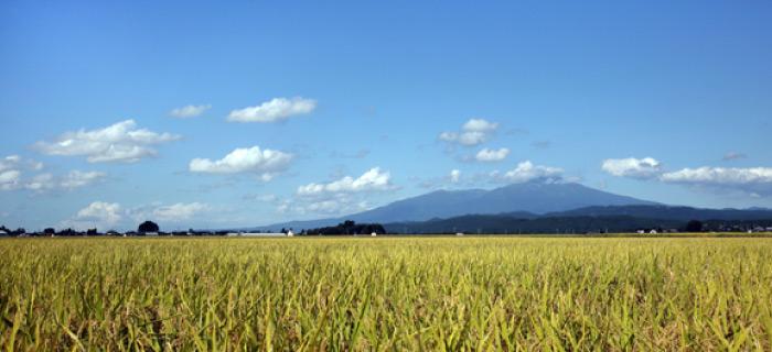 庄内町の風景