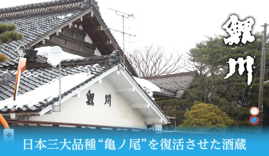 """日本三大品種""""亀ノ尾""""を復活させた酒蔵 鯉川"""