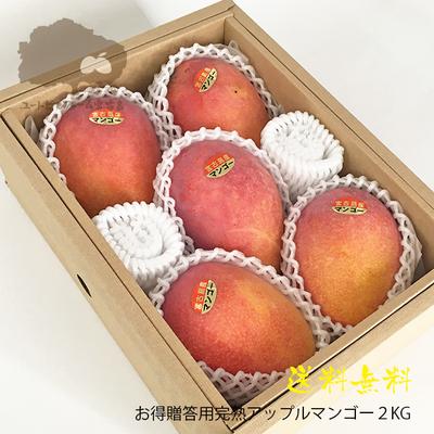 レギュラーアップルマンゴー2Kg