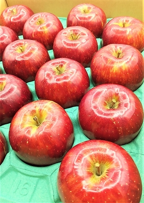 築城果樹園のりんご2種詰め合わせ(サンつがる&さんさ)5kgセット