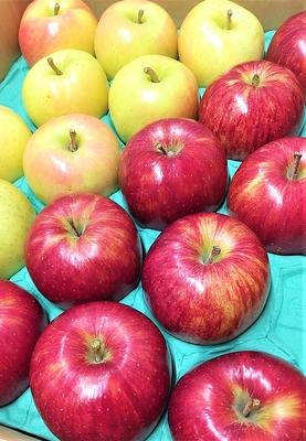築城果樹園のりんご2種詰め合わせ(昂林&トキ)5kgセット