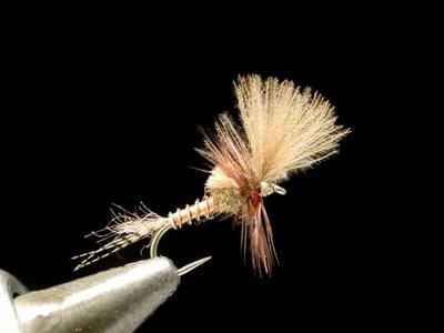 Renn Harrop ラストチャンスグリプル march brown