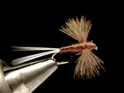 axisco CDCスピナー brown
