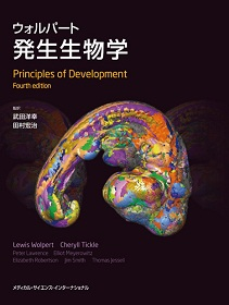 ウォルパート発生生物学**9784895927161/メディカルサイエンス/原著者:Lewis /978-4-89592-716-1**