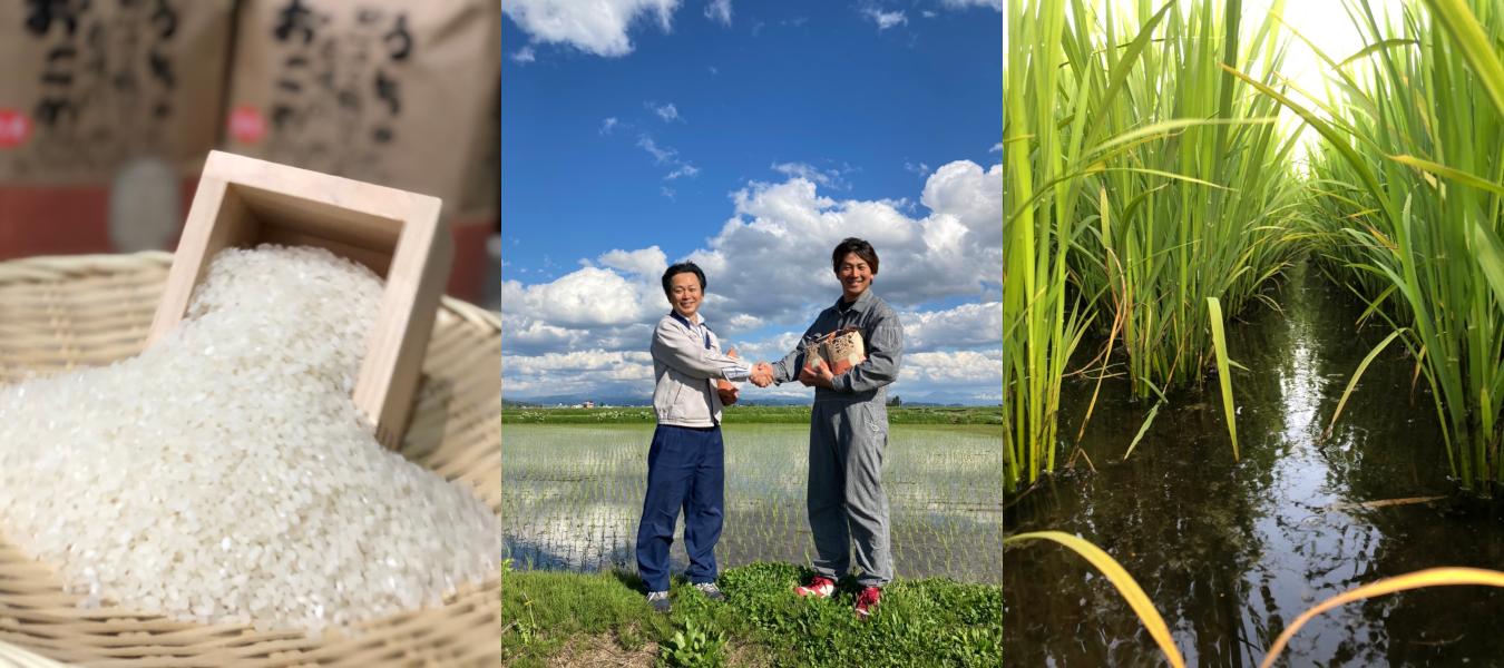 ゆめぴりか【北海道米・特別栽培米】北海道川添農園