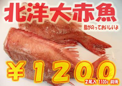 北洋大赤魚