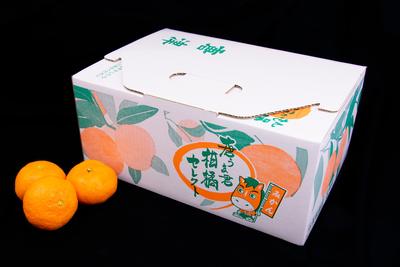 温室ミカン/3kg(バラ/送料無料)