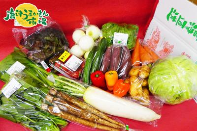 野菜詰合せセット(送料無料)