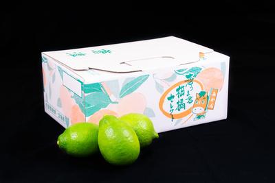唐津産レモン/(1.5kg/送料無料)