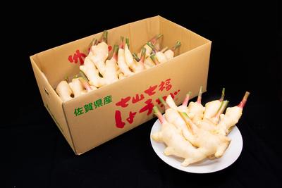 七福しょうが/(4kg/送料無料)