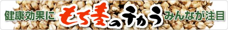 健康にみんなが注目 もち麦のチカラ