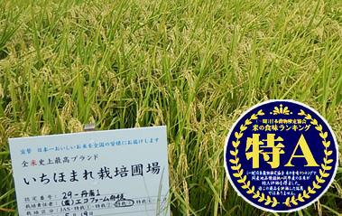 いちほまれ-JA福井丹南の特別栽培米 福井県のトップブランドのお米[5kg]