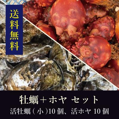 【送料無料!】三陸産殻付き活牡蠣[小サイズ]10個+石巻産活ホヤ10個 セット