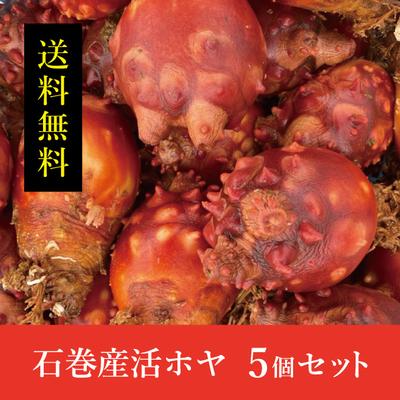 【送料無料!】石巻産活ホヤ 5個セット(サイズ混合)