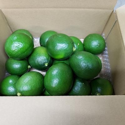 グリーンレモン箱込約2㌔