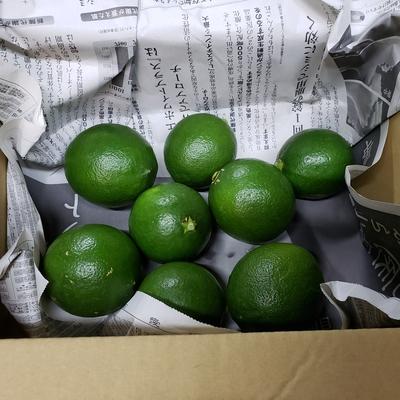 グリーンレモン箱込約1㌔