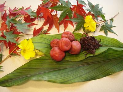 【毎日の食卓に】熊野の梅干し 1kg
