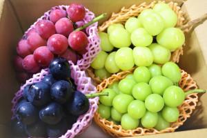 葡萄4種ミックス:シャインマスカット、巨峰、ナガノパープル