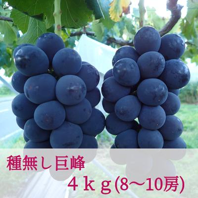 種無し巨峰(4kg/8~10房)
