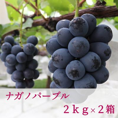 ナガノパープル (2kg/3~5房入り) × 2箱