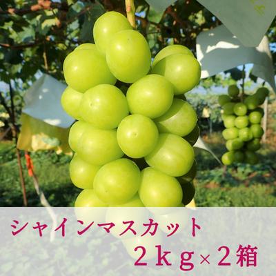 シャインマスカット (2kg / 3~4房入り) × 2箱