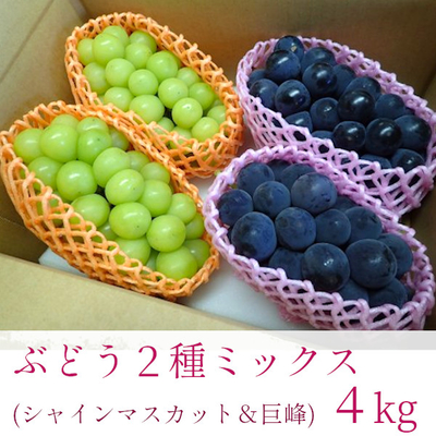 ぶどう 2種ミックス ( シャインマスカット & 種なし巨峰 ) × 2箱