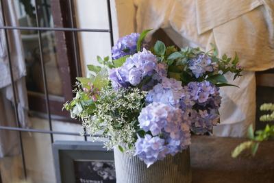紫陽花の寄せ植え<1>
