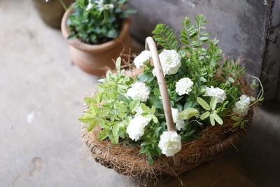 ペチュニアと葉物のシンプル寄せ植え