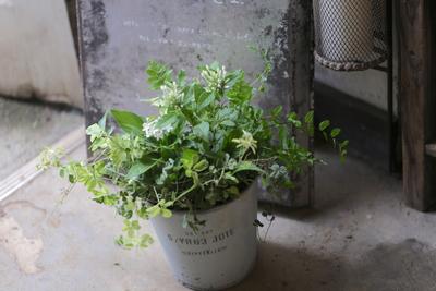 白とグリーンの爽やかな寄せ植え<ブリキトール>